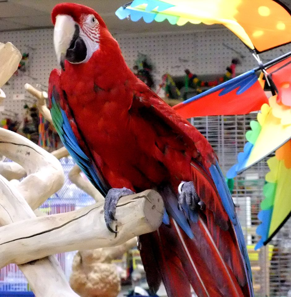 Home - World of Birds